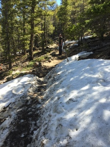 Snow on Deer Mountain Trail