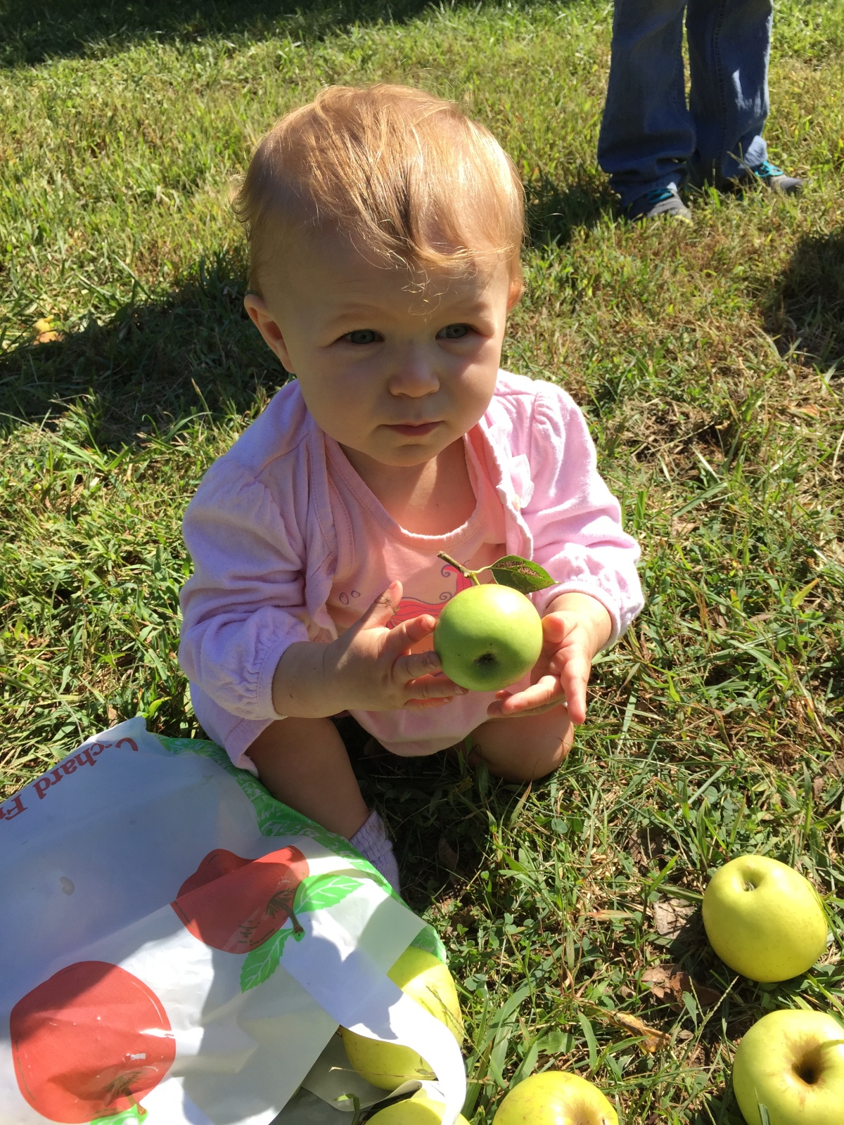 Apple Orchard Outing in Kansas City