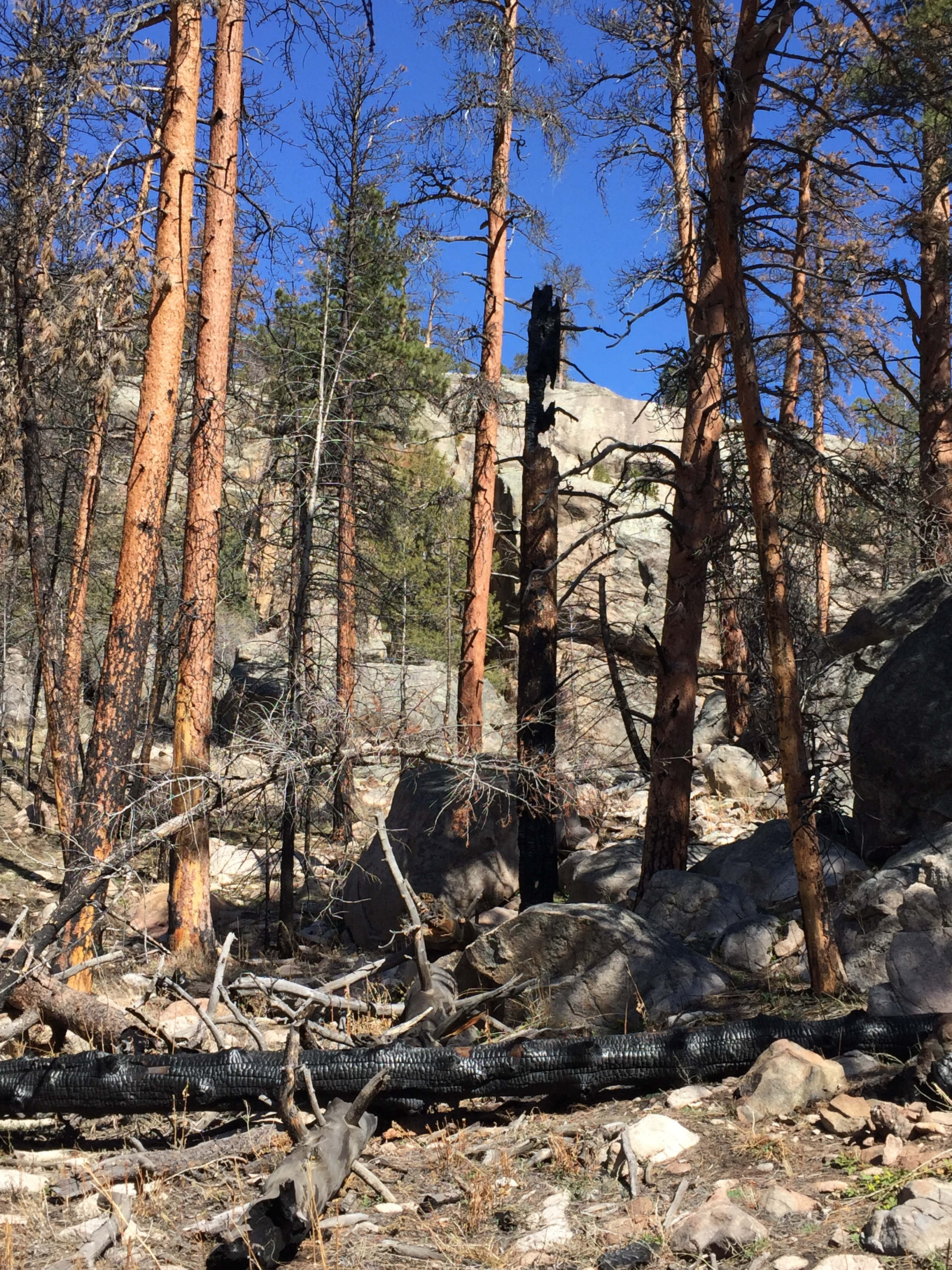 fire damage in rocky mountain national park