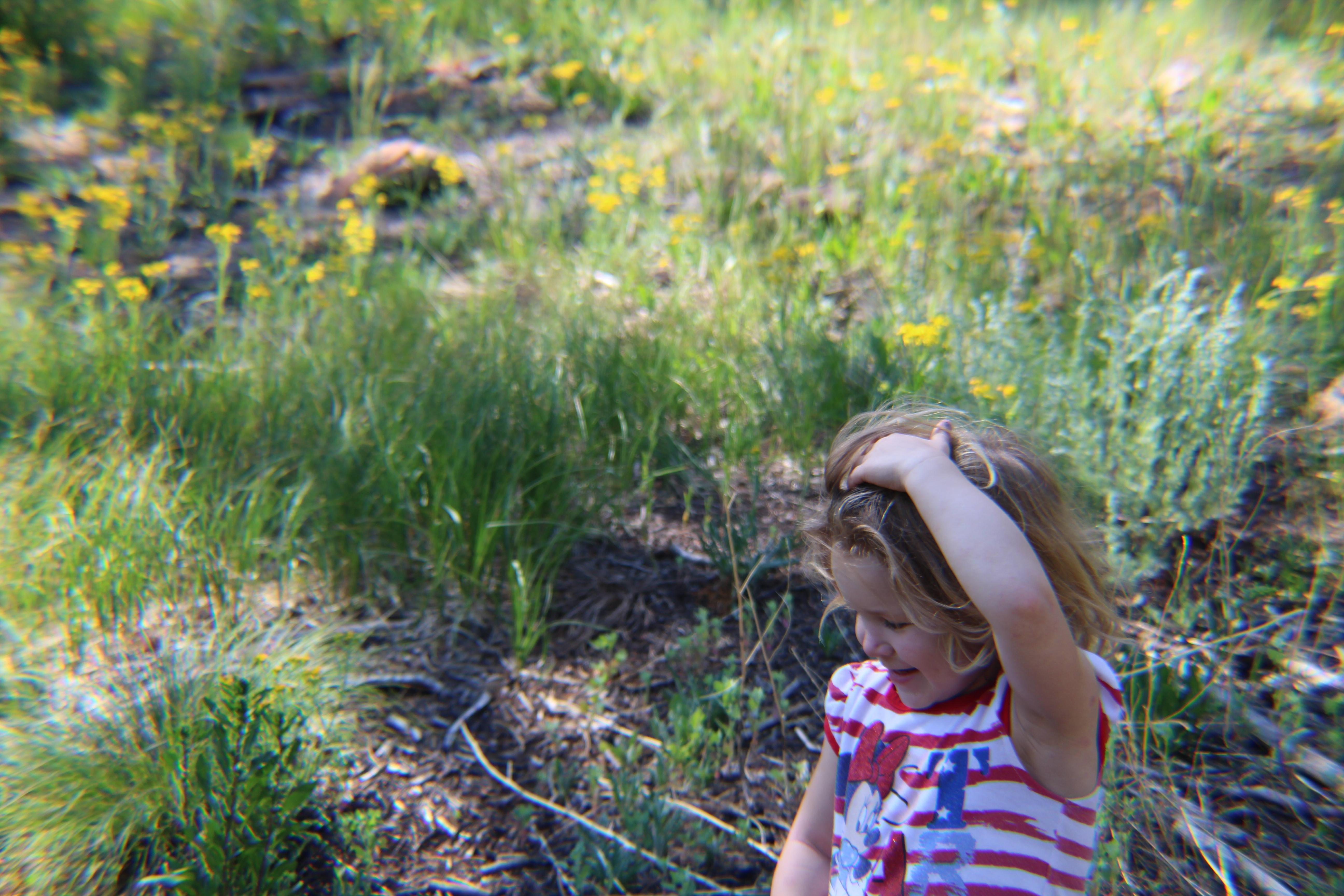 We love wildflowers