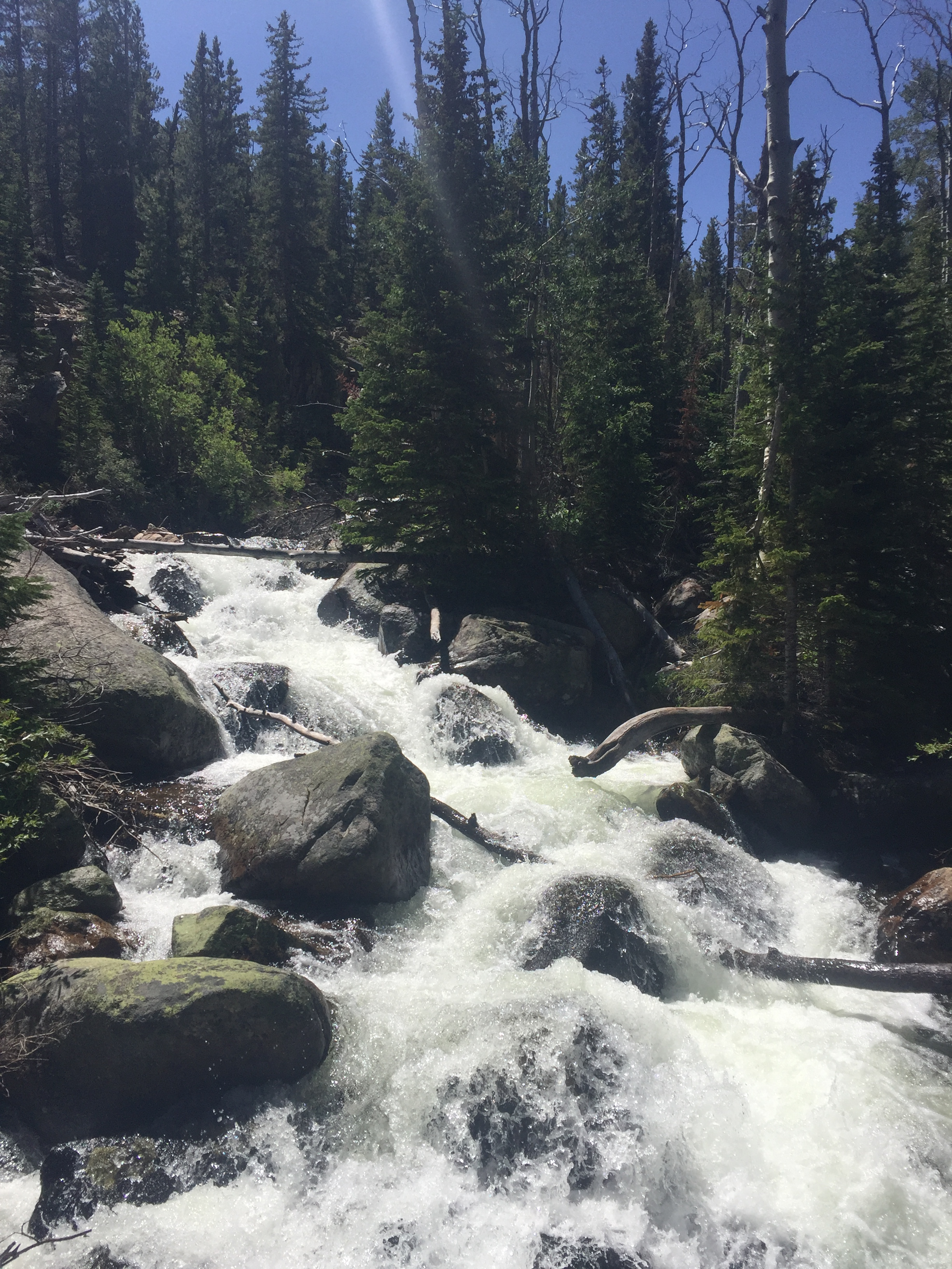Roaring Mountain Stream in Rocky Mountain National Park