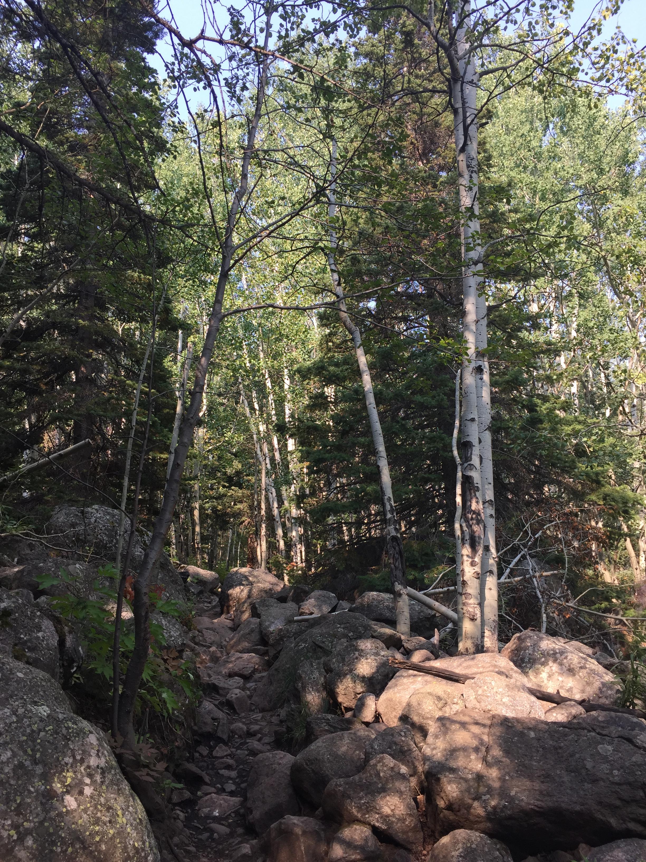 Trail to Cub Lake
