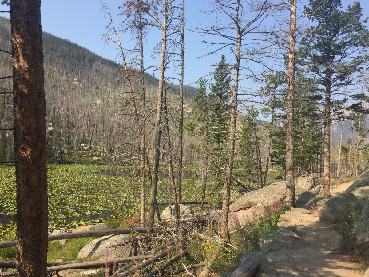 Cub Lake Trail – a Wildlife Hotspot in Rocky Mountain National Park
