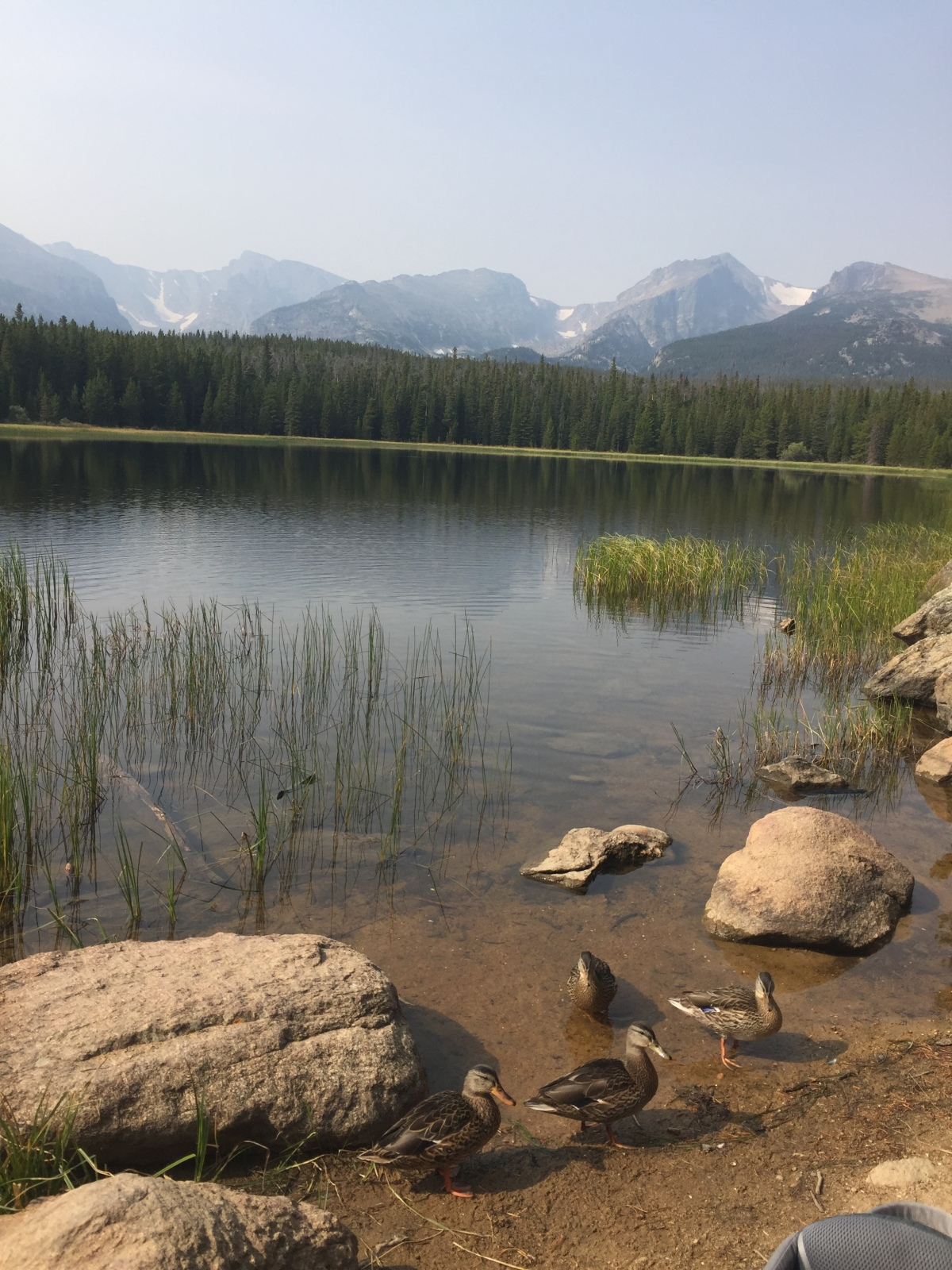 Bierstadt Lake in Rocky Mountain National Park