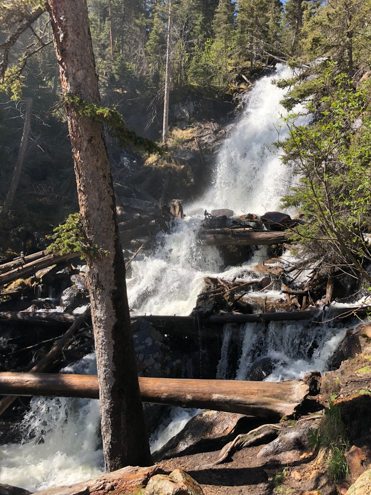 Fantastic Family Hike to Fern Falls in Rocky Mountain NationalPark