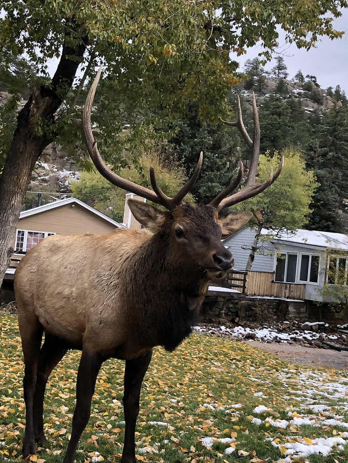 elk season in estes park colorado