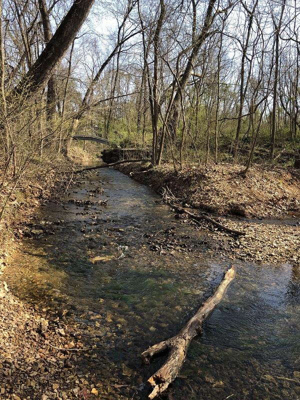 tanyard creek bella vista