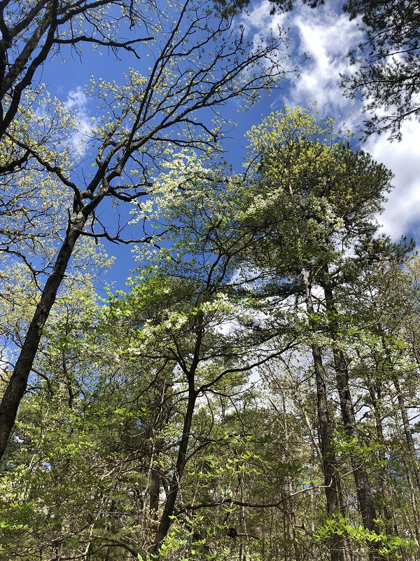spring hiking. family hiking pigeon roost trail in hobbs state park - northwest arkansas