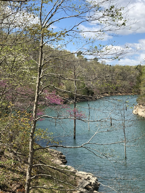 View of Beaver Lake. family hiking pigeon roost trail in hobbs state park - northwest arkansas