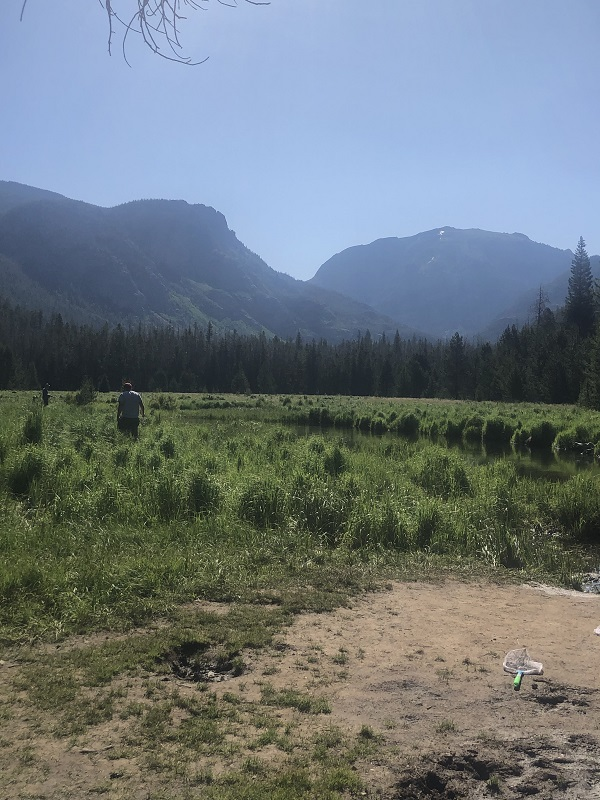 East Meadow is a good spot for fishing in Rocky Mountain National Park
