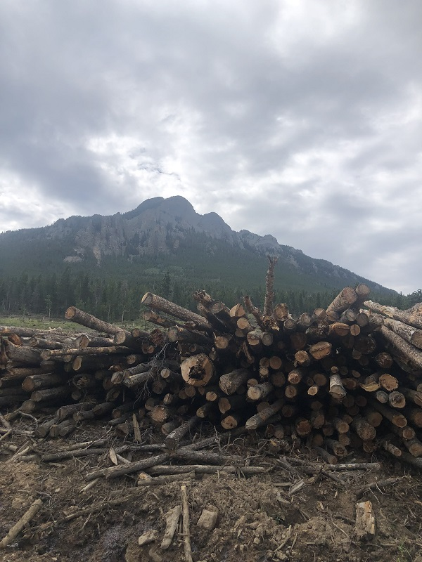 Trees cleared by Twin Sisters in Estes Park Colorado