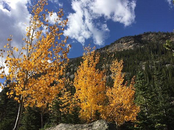 Golden aspens in Rocky Mountain National Park
