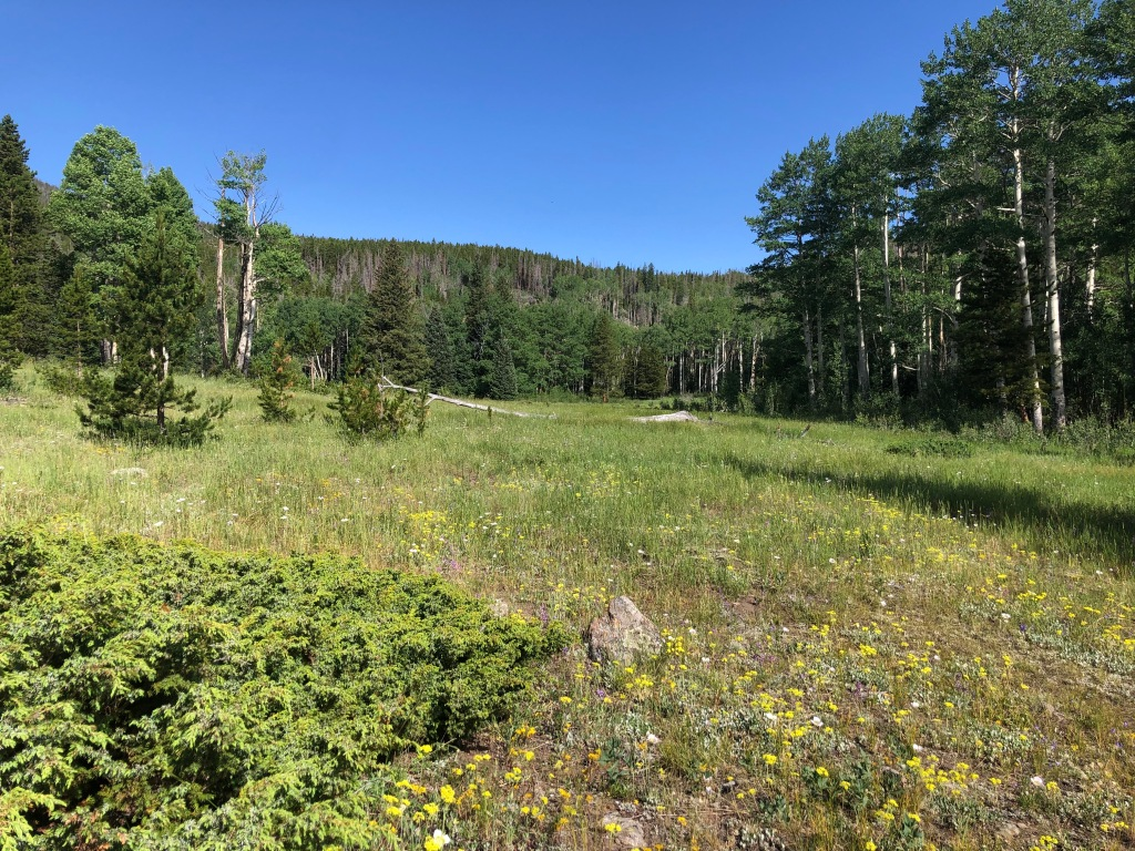 Hollowell Park in Rocky Mountain National Park. To Mill Creek Basin. Loop trail