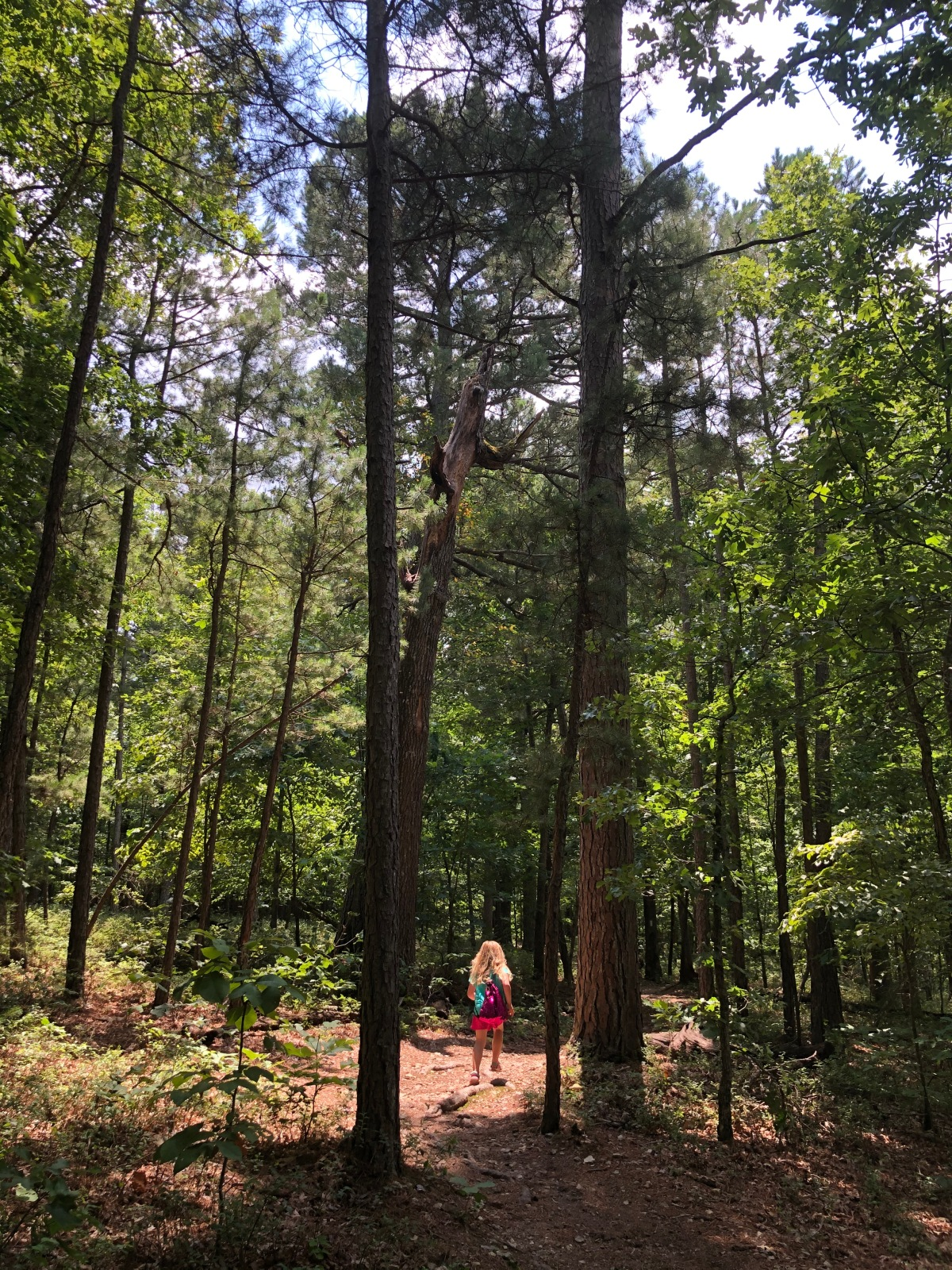 Arkansas Hiking: It's Too Hot, I Hate Ticks, I'm Scared of Snakes…And Other Excuses I Made This Summer