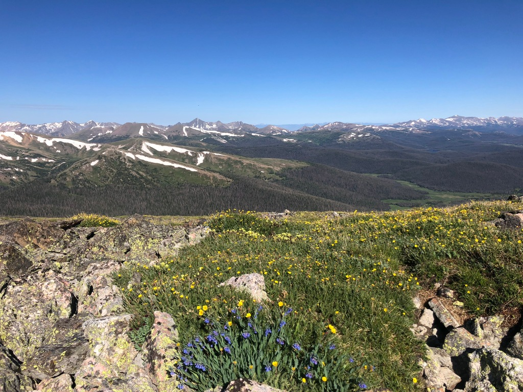 wildflowers between Chiquita and Chapin in Rocky Mountain National Park