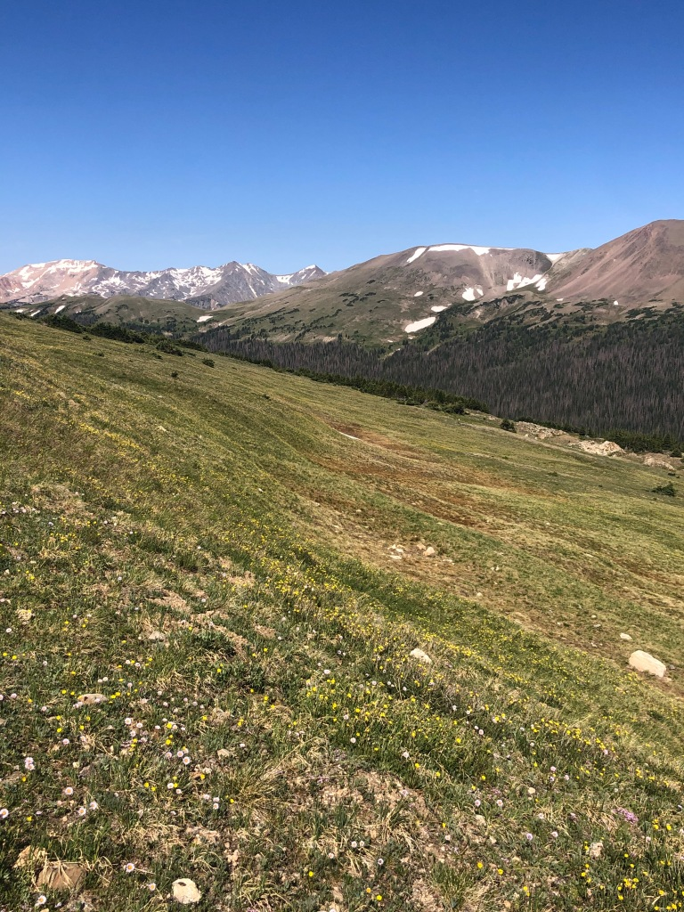 wildflowers and mountain views along ute trail in rocky mountain national park. colorado hikes