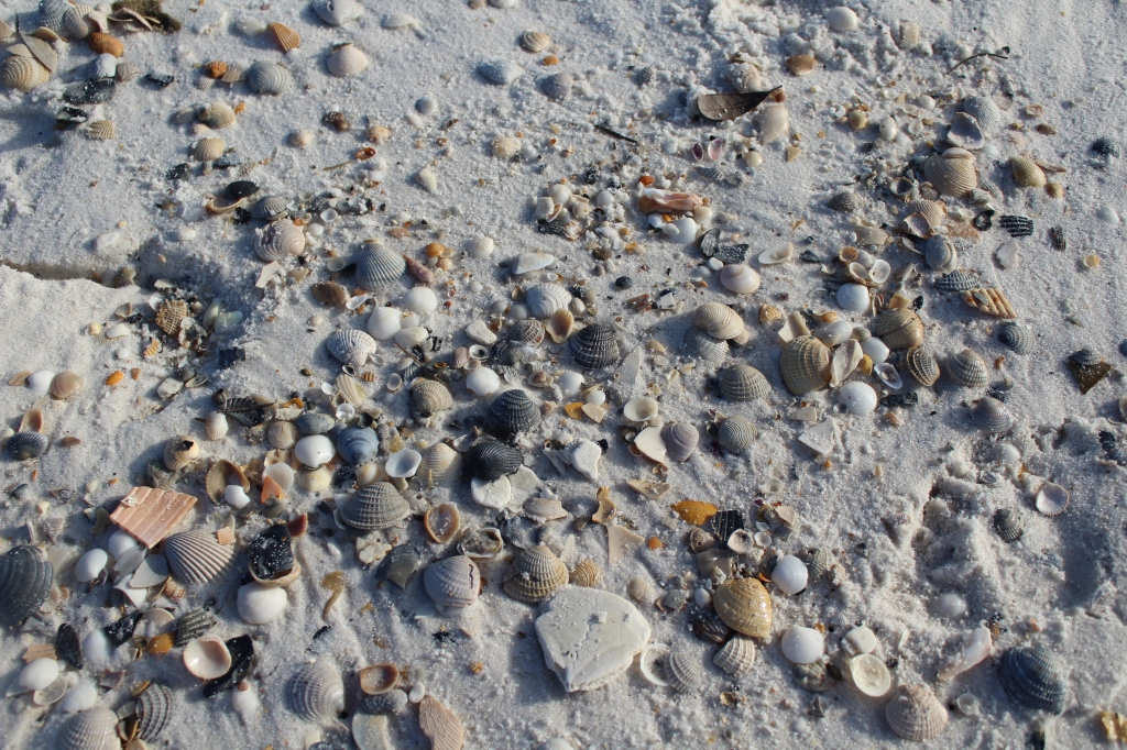 Shells on the beach Gulf State Park in Gulf Shores, Alabama